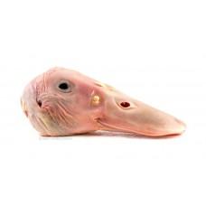 Kachní hlavy